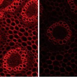 How optical filters can make your custom microscopy illumination work smarter