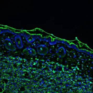 Happy cells make better data!